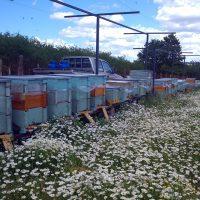 Egyes számú kísérleti méhészet